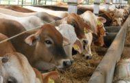 Contoh Hewan Ternak Hias Yang Menguntungkan