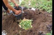 Cara Membuat Pupuk Kompos Dari Rumput Liar Gampang Kok