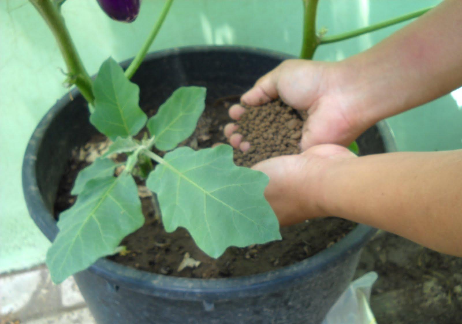 Yuk Belajar Mengetahui Dan Cara Membuat Pupuk Organik Padat Granul