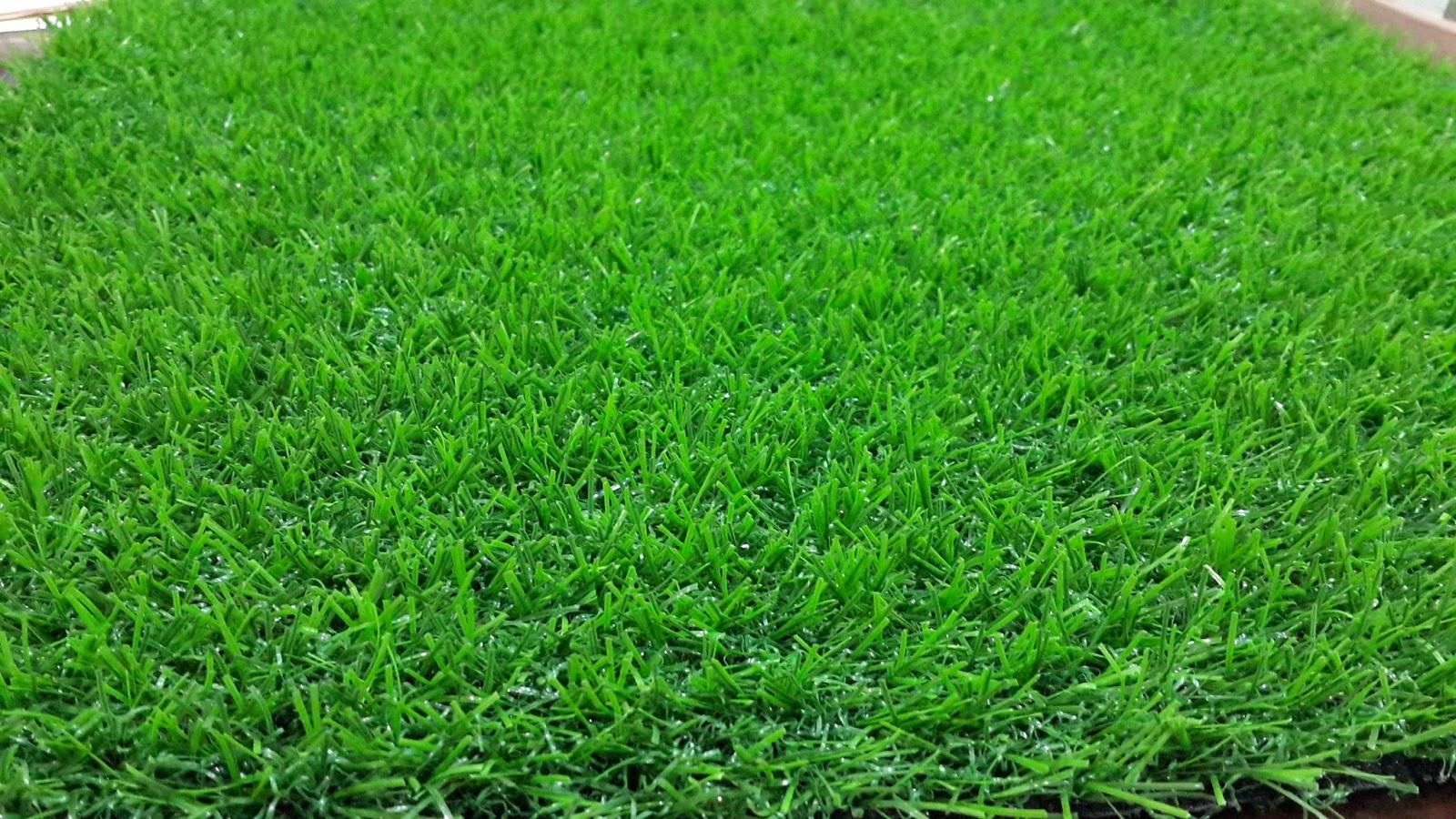 Jenis Rumput Untuk Taman