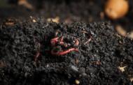 Macam-macam Kompos Organik