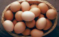 Resep Membuat Martabak Telur